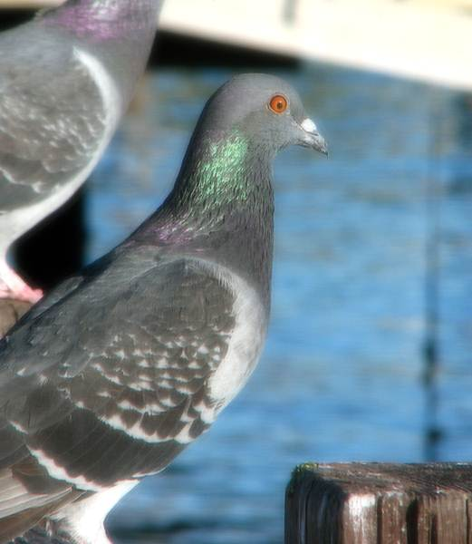Bird control essex