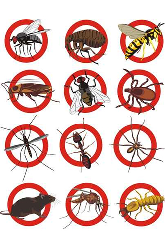 Expert Pest Control Essex